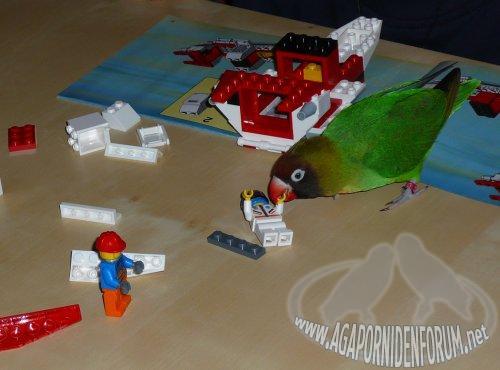 alles ber agaporniden auch agas spielen mit lego. Black Bedroom Furniture Sets. Home Design Ideas
